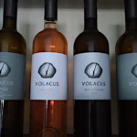 Oi-ampelones-tis-Volacus-Wine-stin-Tino-8